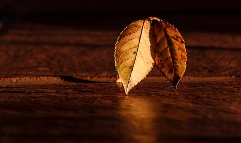 autumn leaves 恋愛