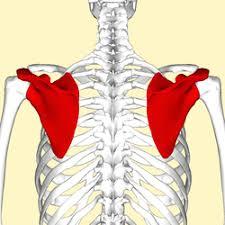 肩甲骨が引っ張られて巻き肩になる