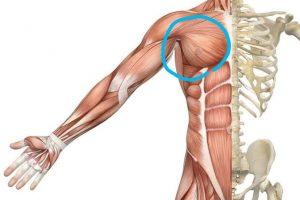 胸筋と肩の筋肉巻き肩を治すストレッチ