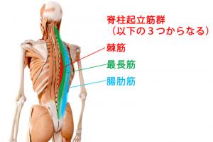 腰の筋肉(脊柱起立筋)のストレッチ