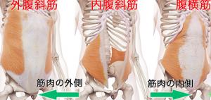 内腹斜筋、外腹斜筋、腹横筋